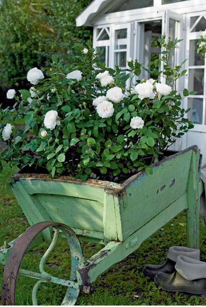 Цветы на колесах